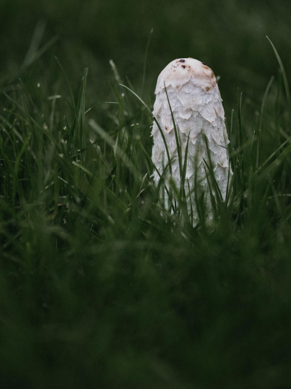 macro photography of white mushroom on green grasses