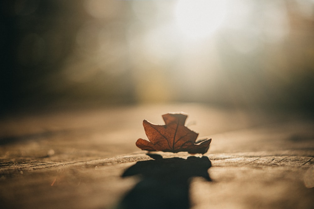 macro photography of brown maple leaf