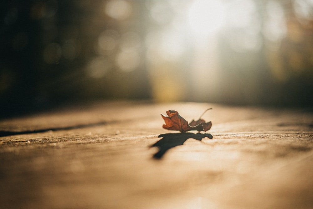 brown maple leaf on floor