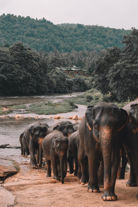 shallow focus photo of black elephants