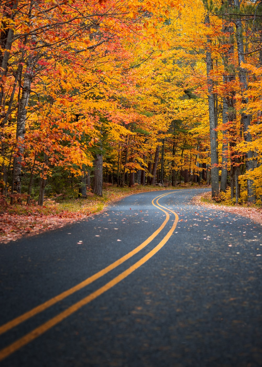 grey concrete road between orange-leafed trees