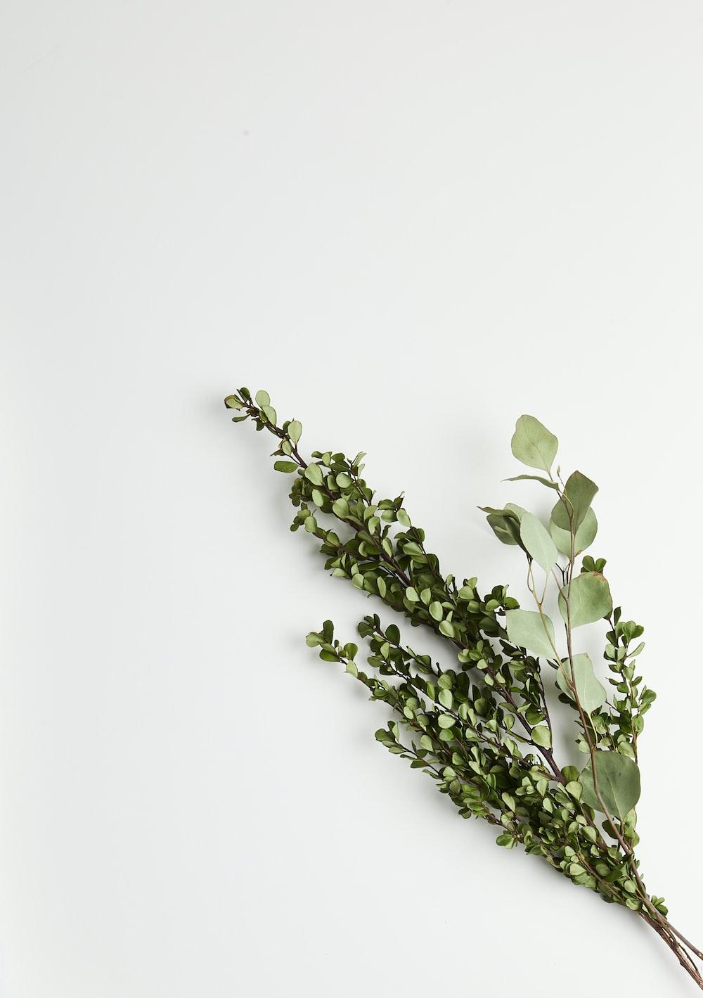 greeb leaf plants