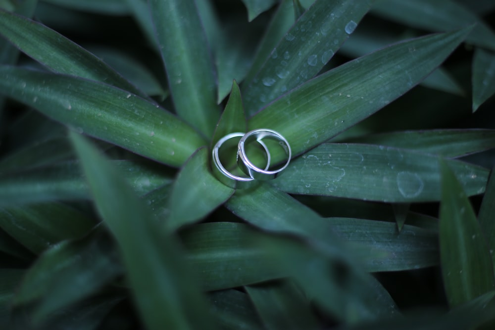 couple rings on green leaf plant