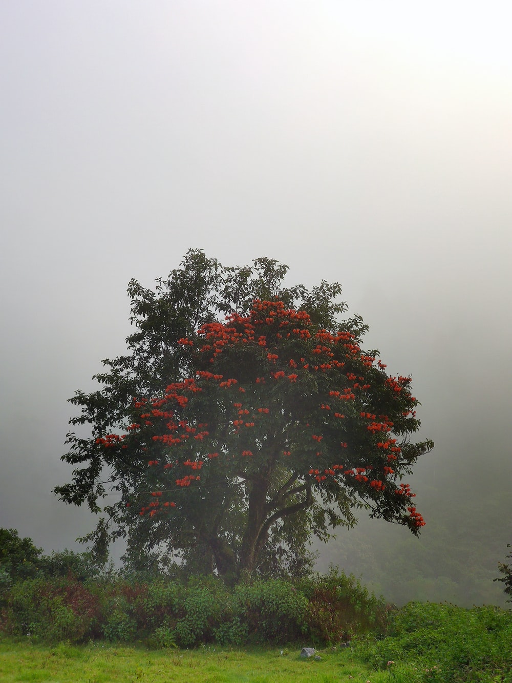 red-petaled flowers tree during daytime