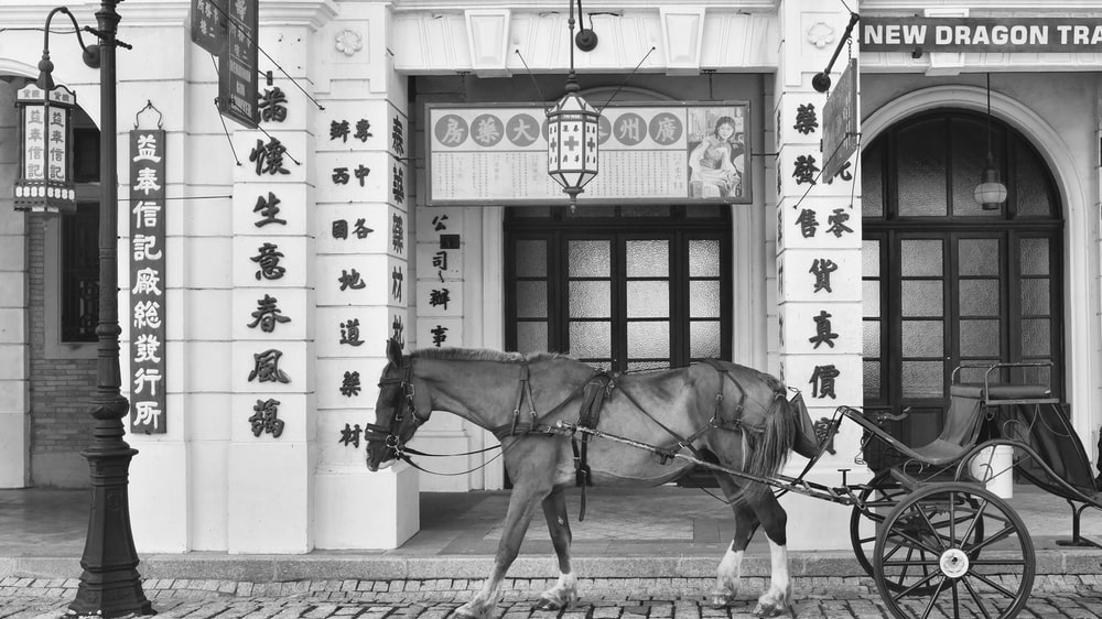 grayscale photography of horse with carriage