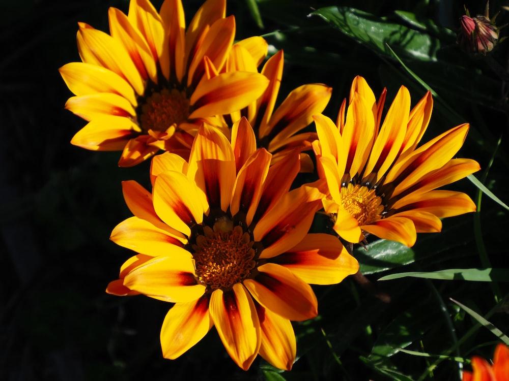 three yellow flowers during daytime