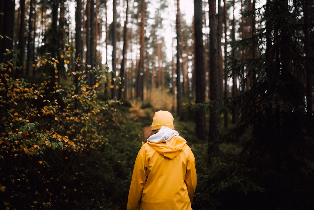 person walking towards forest
