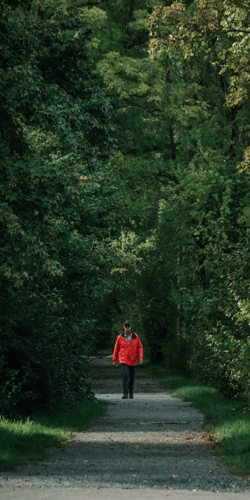 man walks between forest