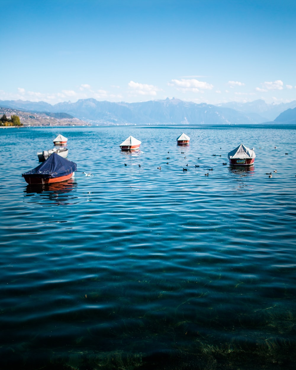 white and blue canoes on body of water during daytime