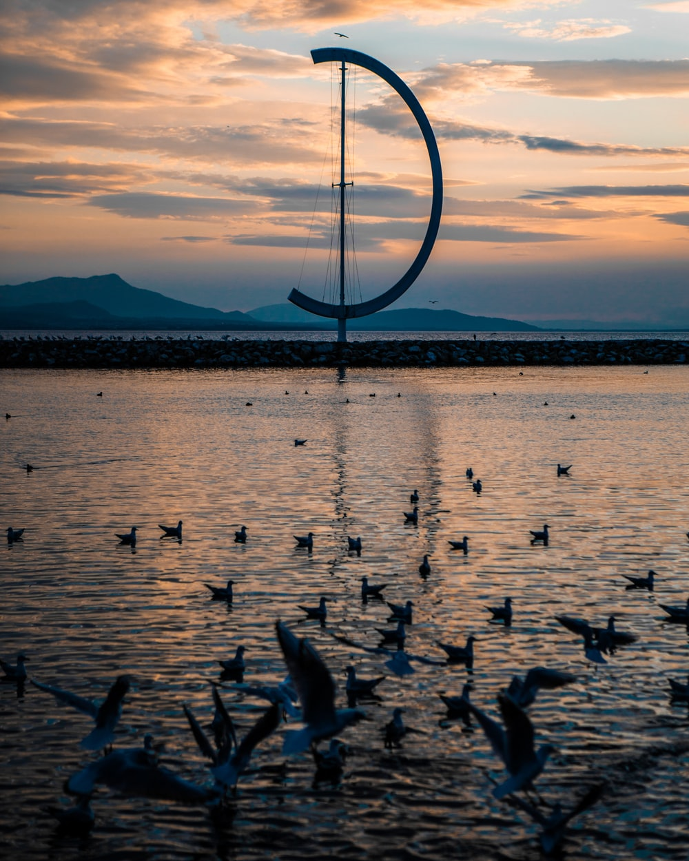 birds on sea