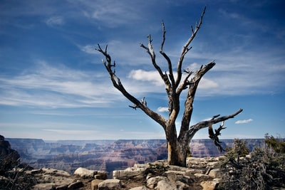 bare tree under blue sky grand canyon zoom background