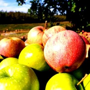 Früchte brauchen pflege Baumgesundheit Workshop