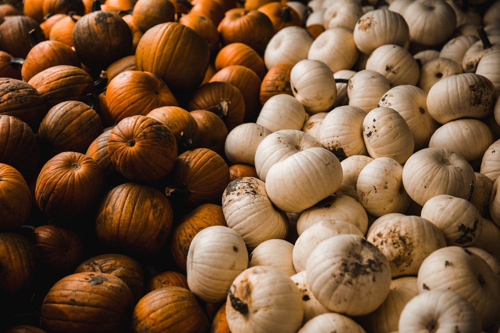 white and brown seeds