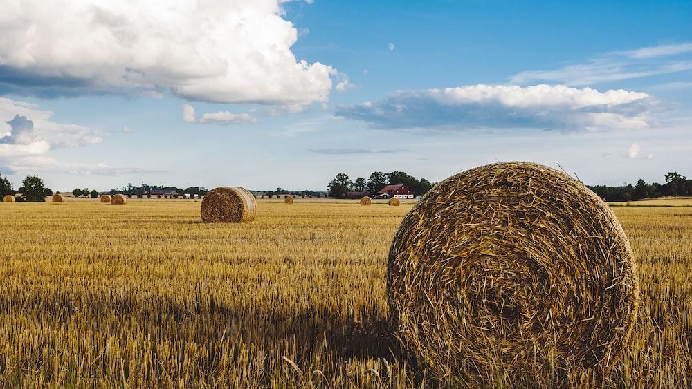 hay on landscape field