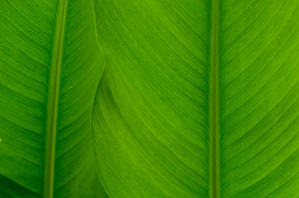 green and white leaf plant