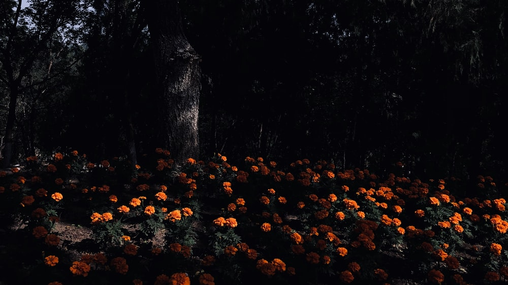orange and orange flower painting