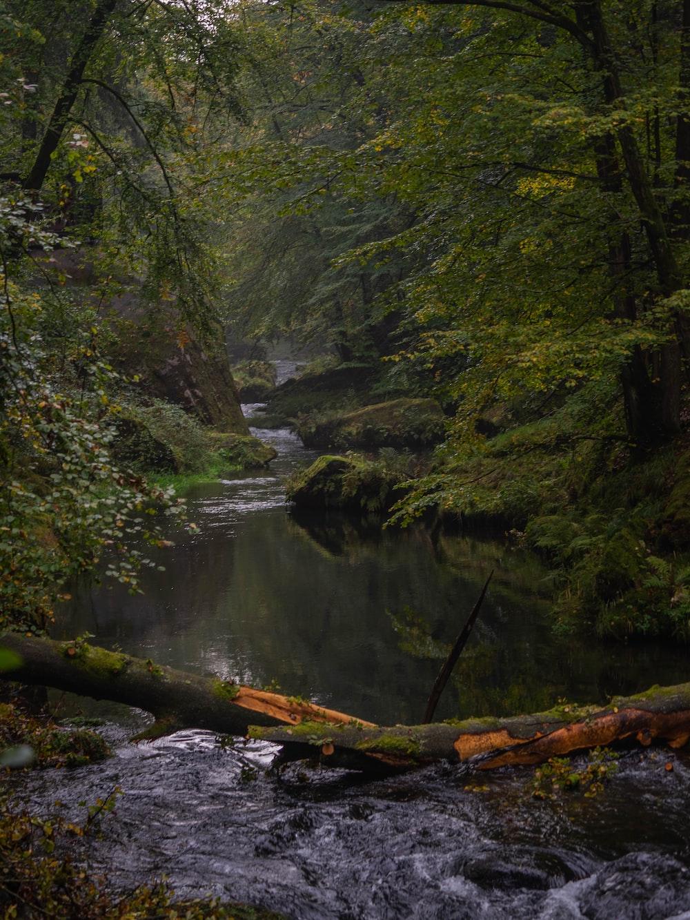 green trees beside body of water