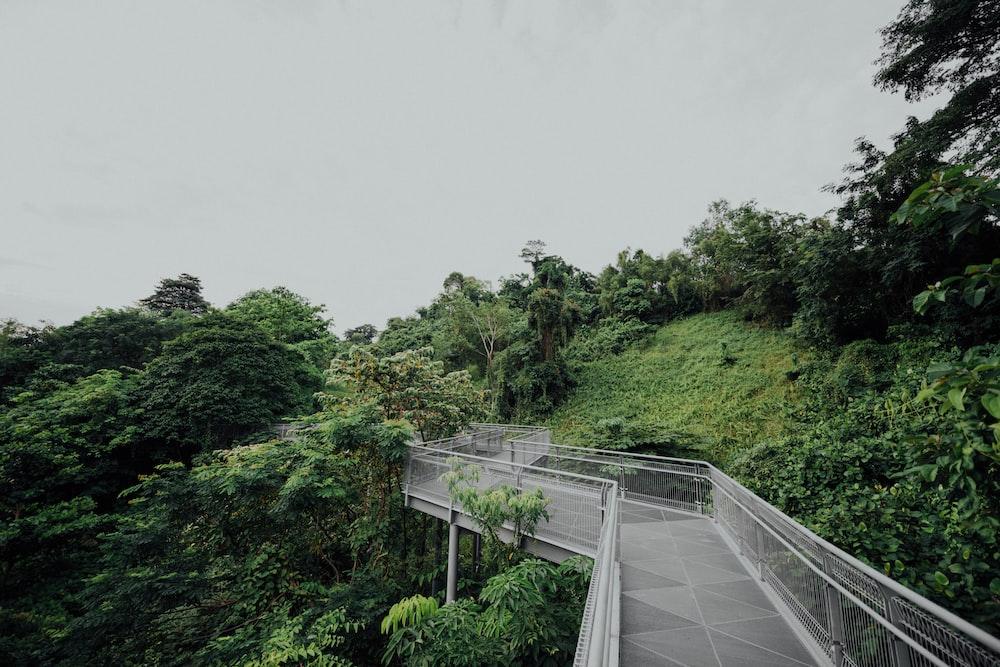 trees beside metal bridge