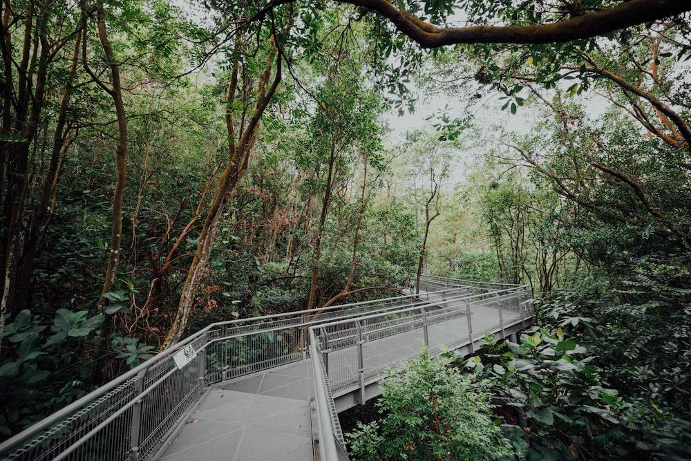concrete walkway between trees