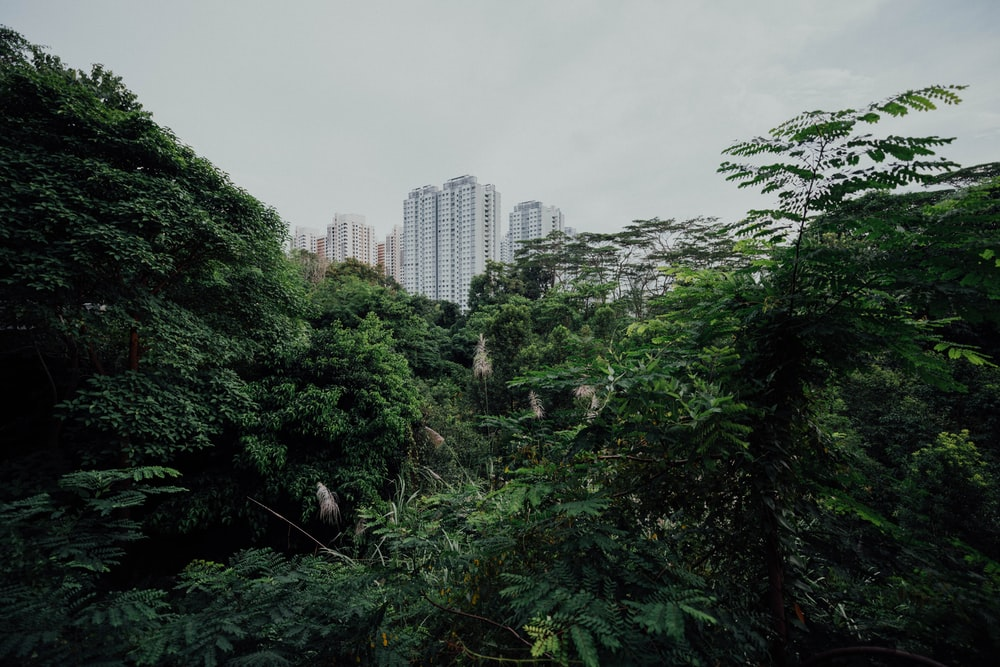 city behind forest