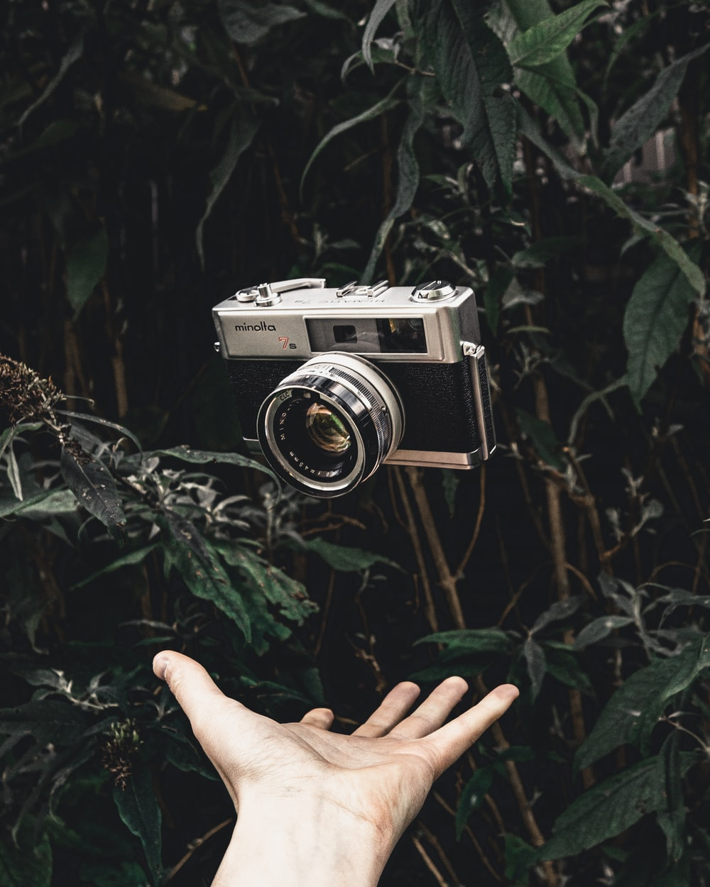 black and gray camera over palm