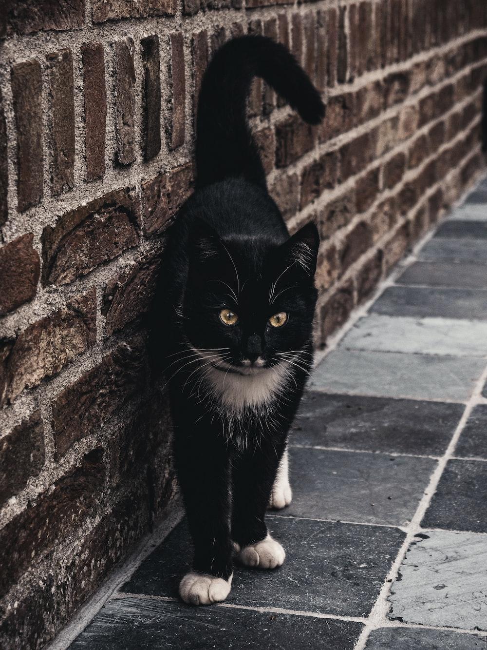 short-fur black cat near brown brick wall