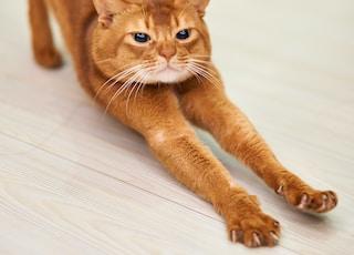 orange cat stretching on white surface