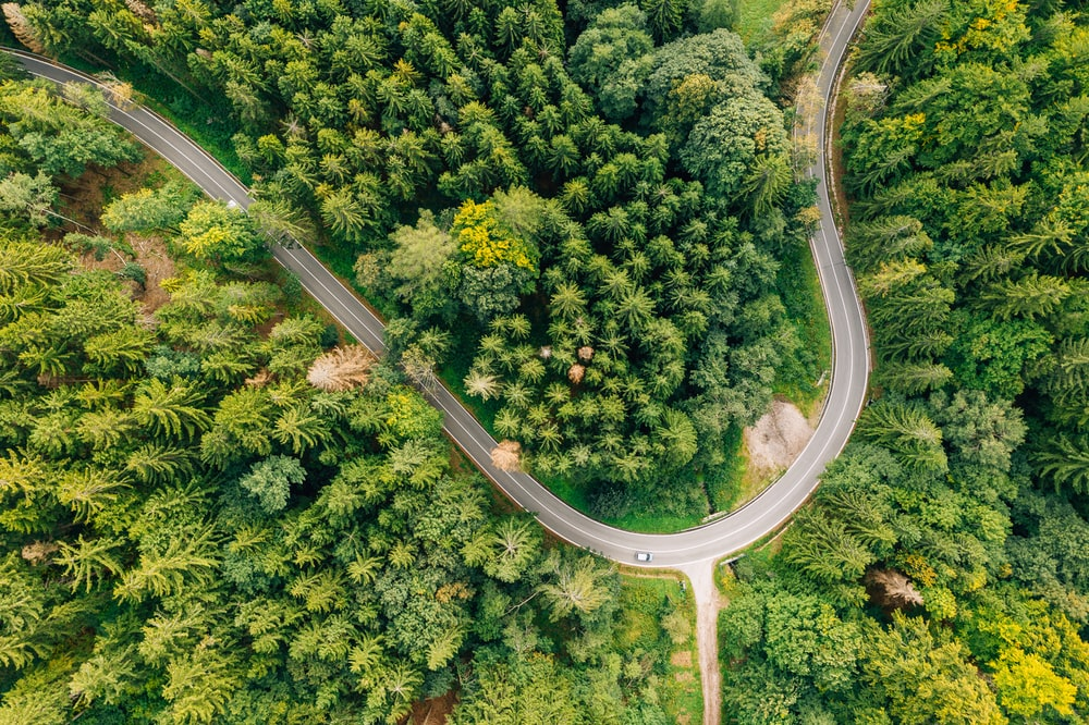 top view photography of pine trees and road