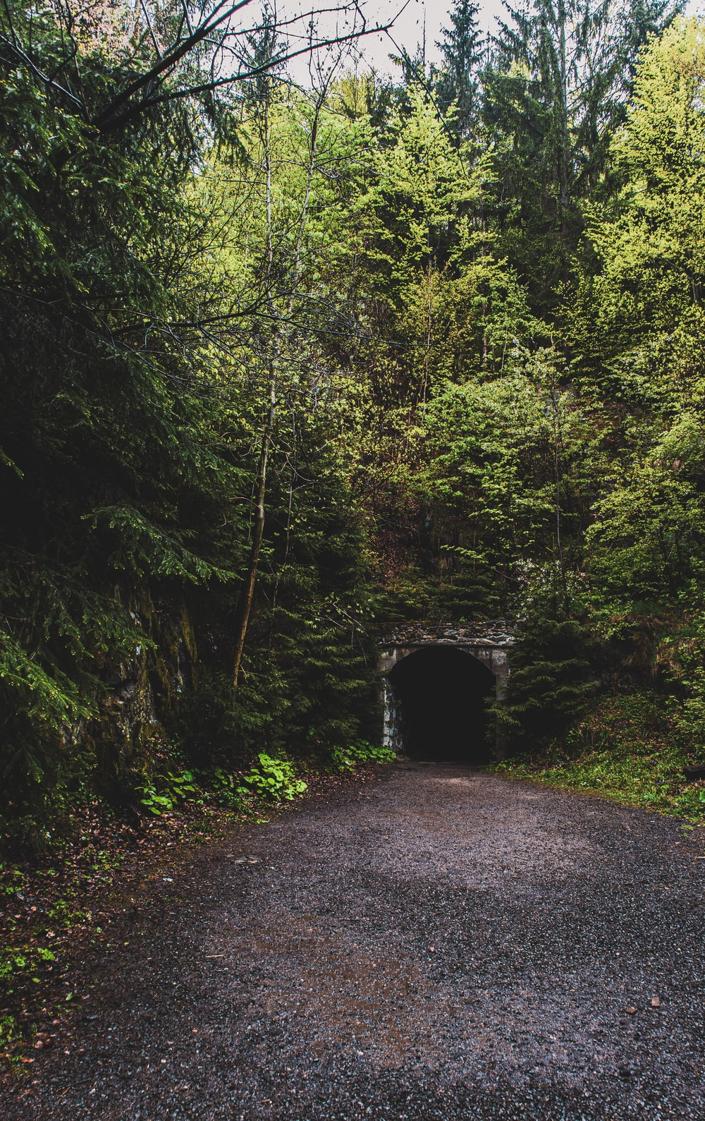 gray road going on tunnel surrounded with tall and green trees during daytime