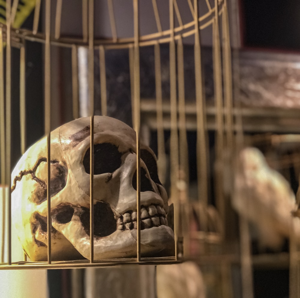 human skull in cage