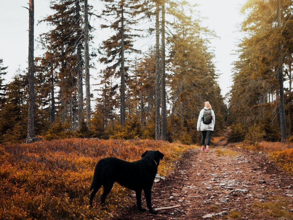black dog near walking person between trees