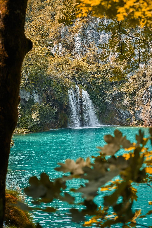 green leaf trees near waterfalls