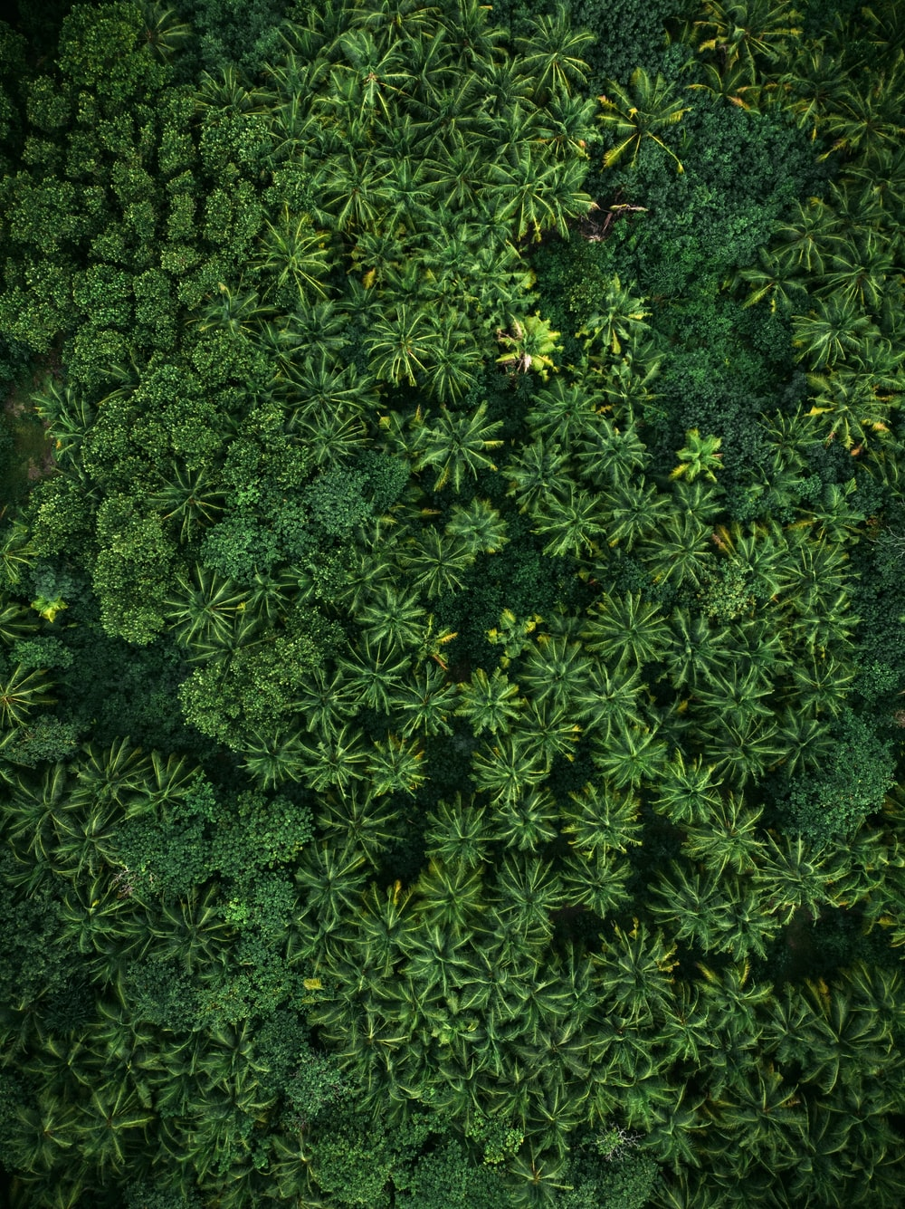 aerial photo of green leaf trees