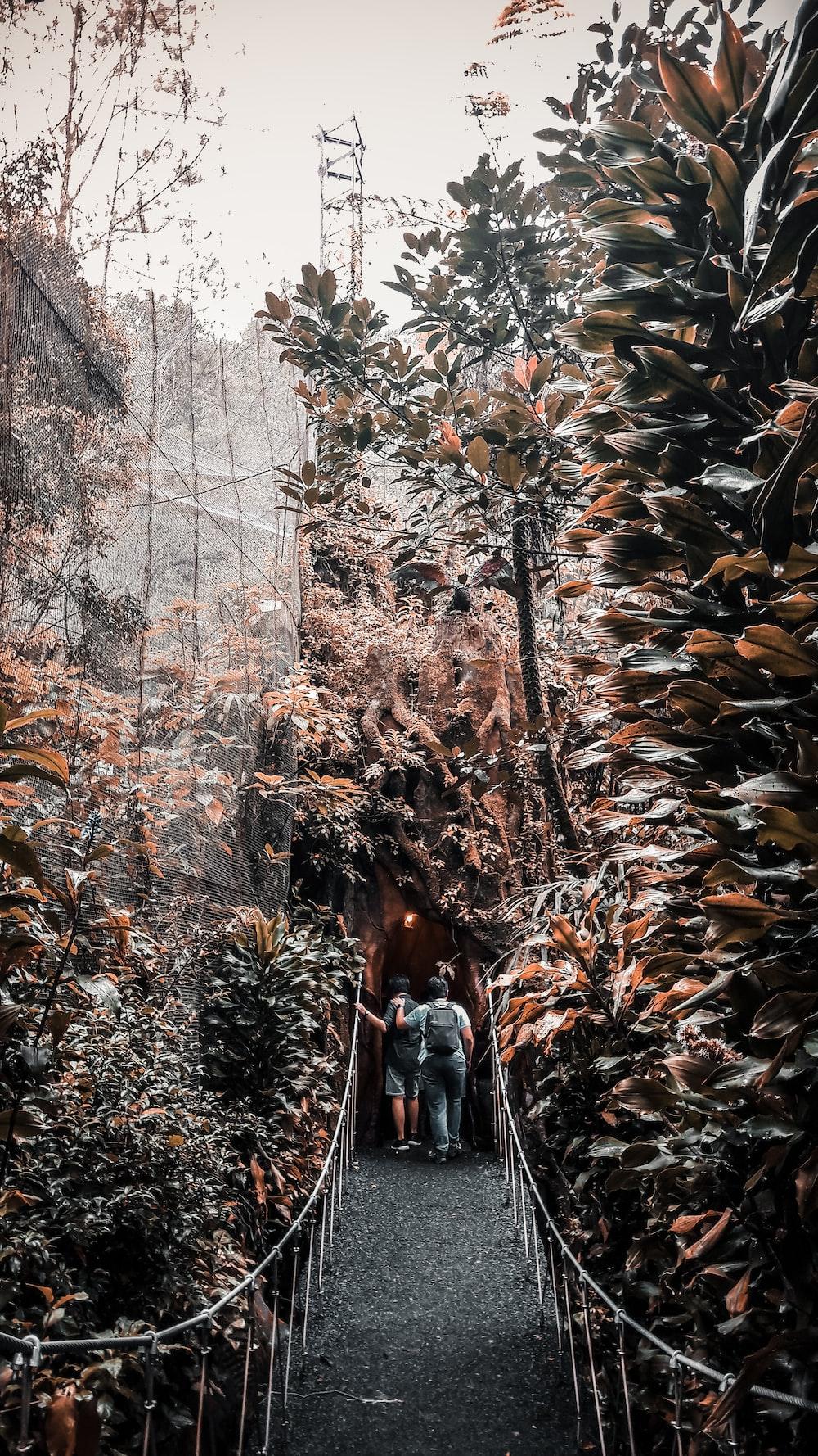 two person walking on bridge between trees during daytime
