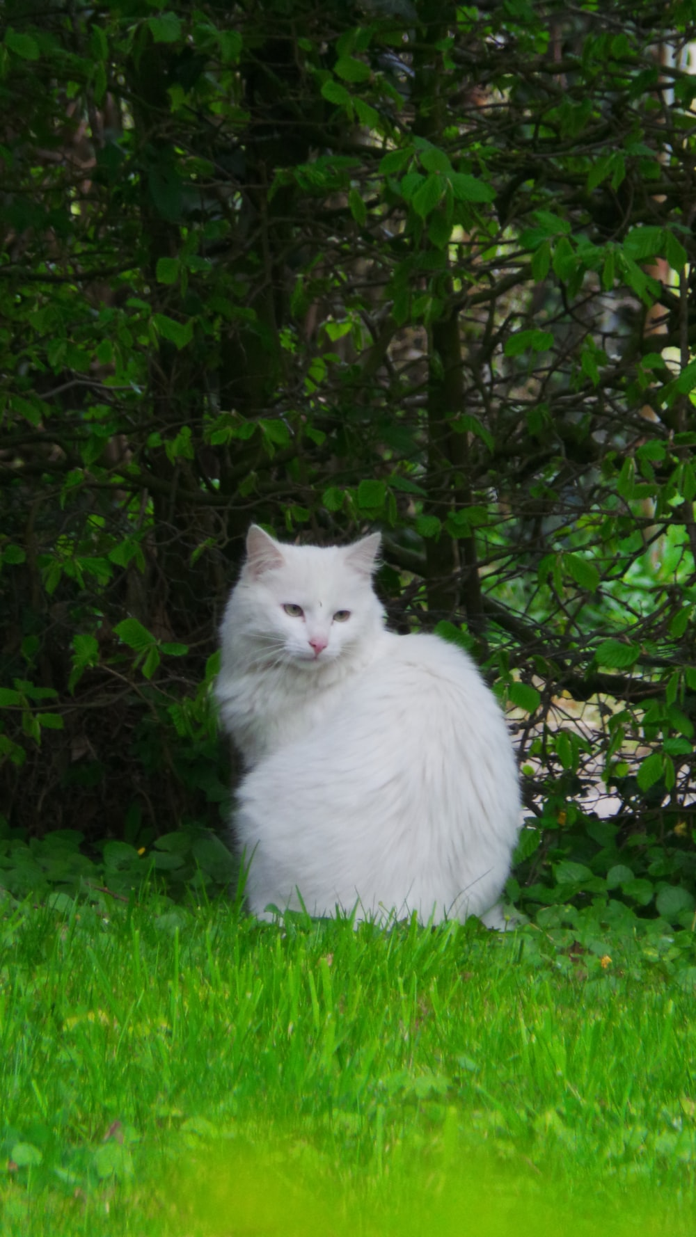 large white cat by grass leafed plant during daytime