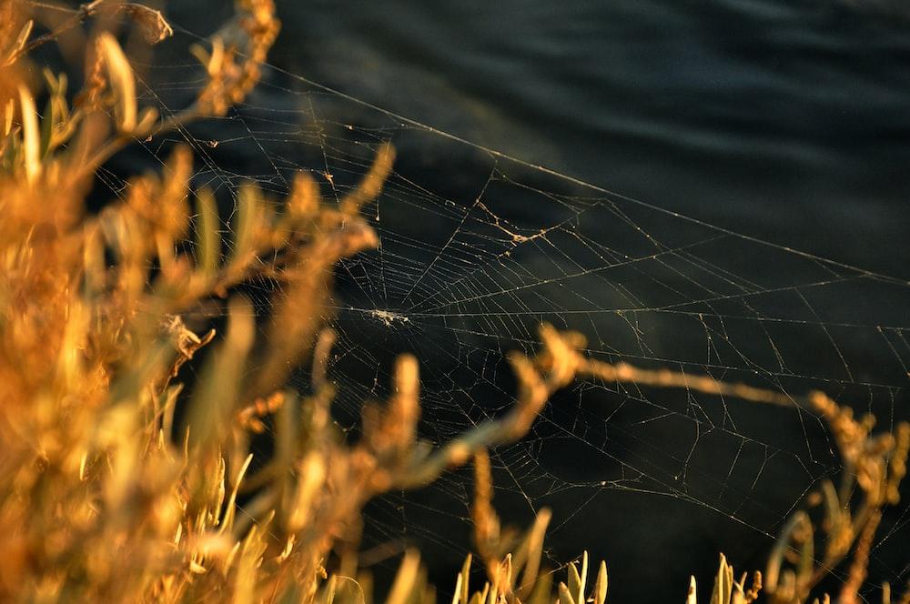 brown cob web near yellow plant