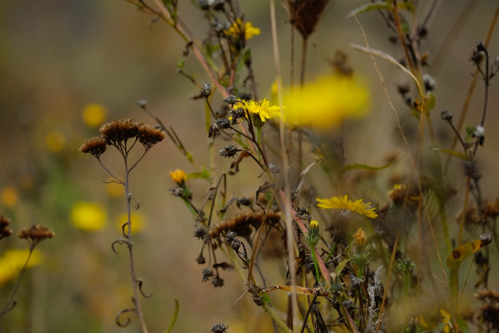 yellow petaled flowers during daytime