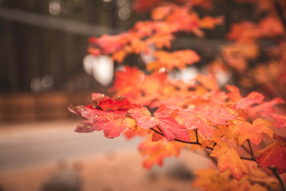 selective focus photography of leaves during autumn season