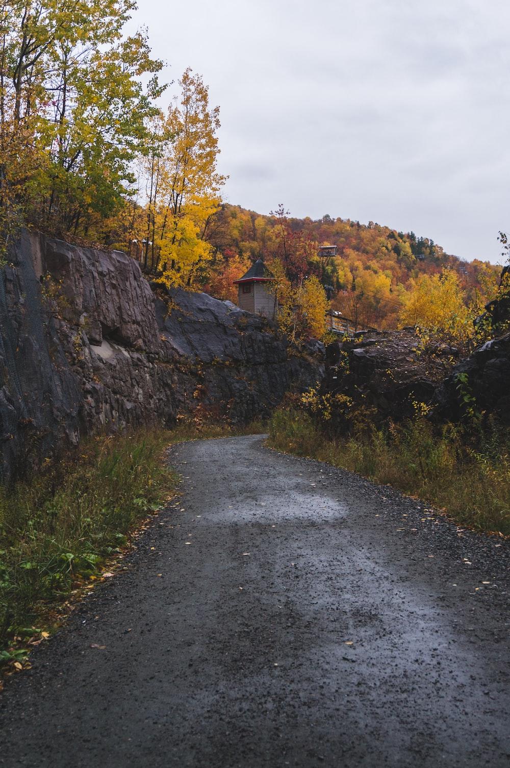 concrete pathway beside trees