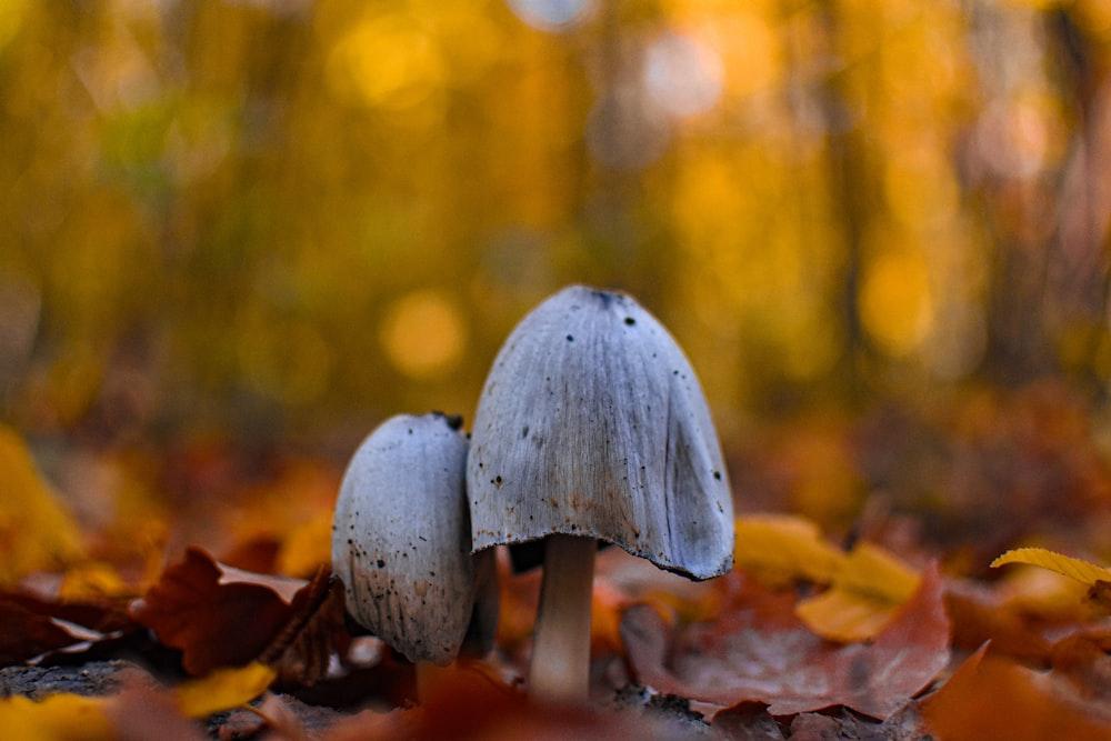 gray mushrooms in ground beside leaves