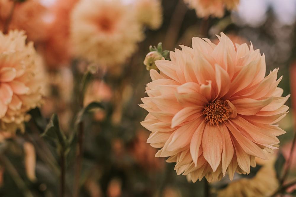 closeup photo of orange cluster petaled flower