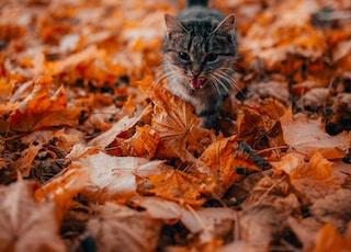 gray cat walking on fallen leaves