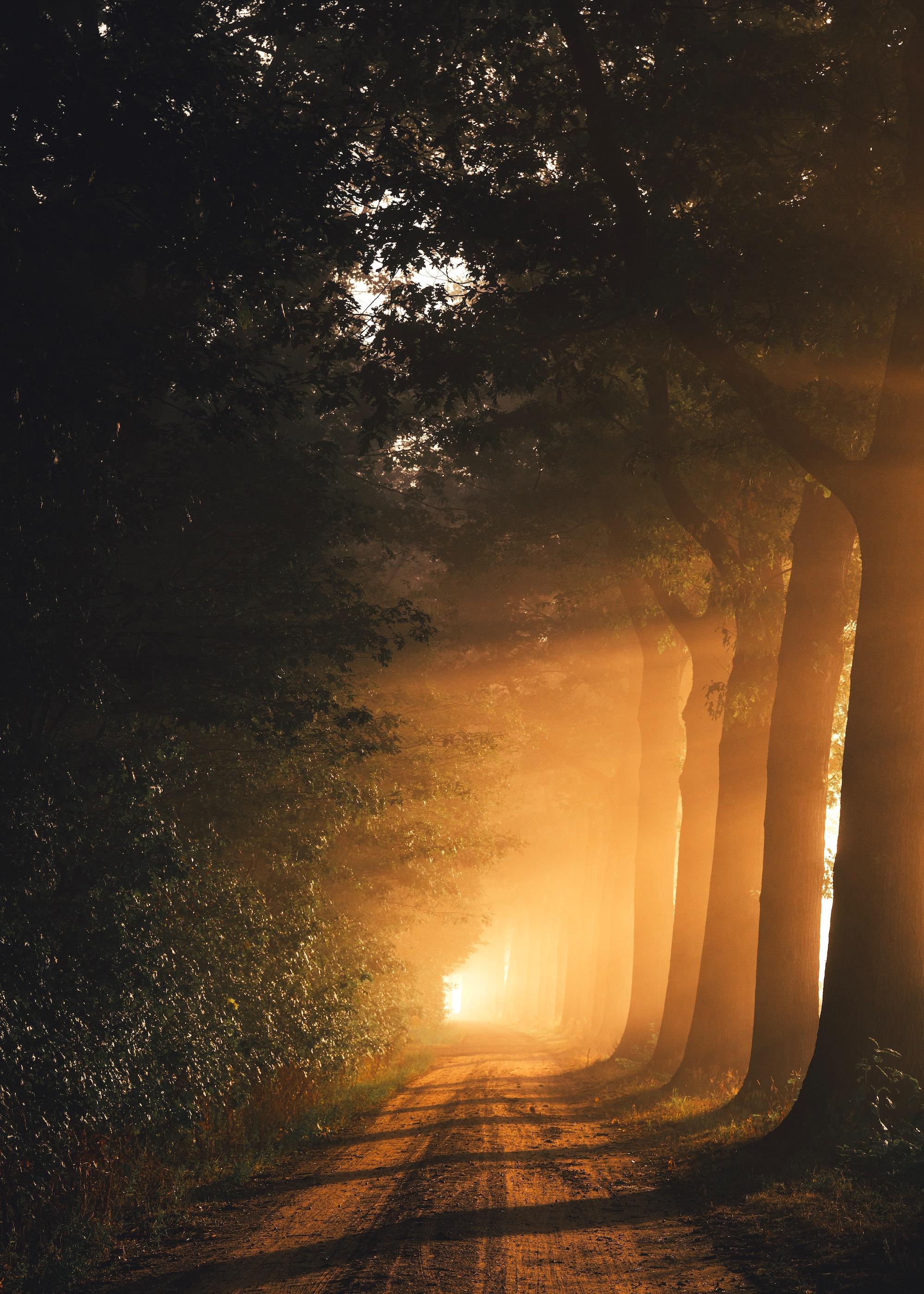 Işık İşçileri kavramı bir tuzaktır