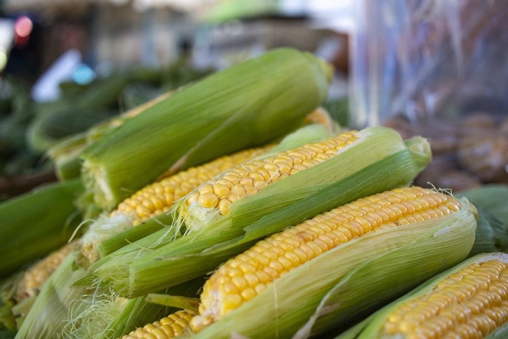 yellow corn lot