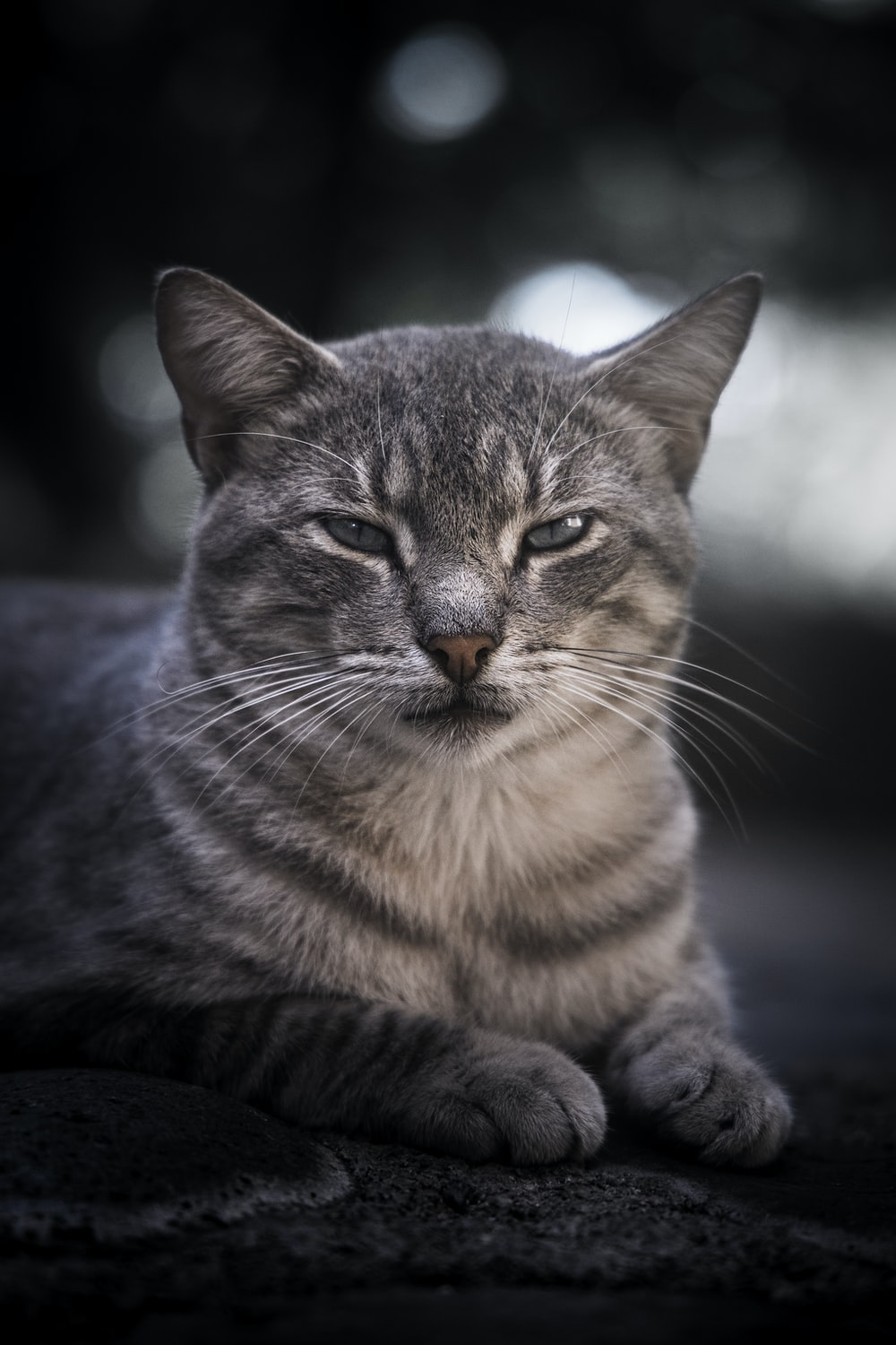 selective focus photography of gray cat