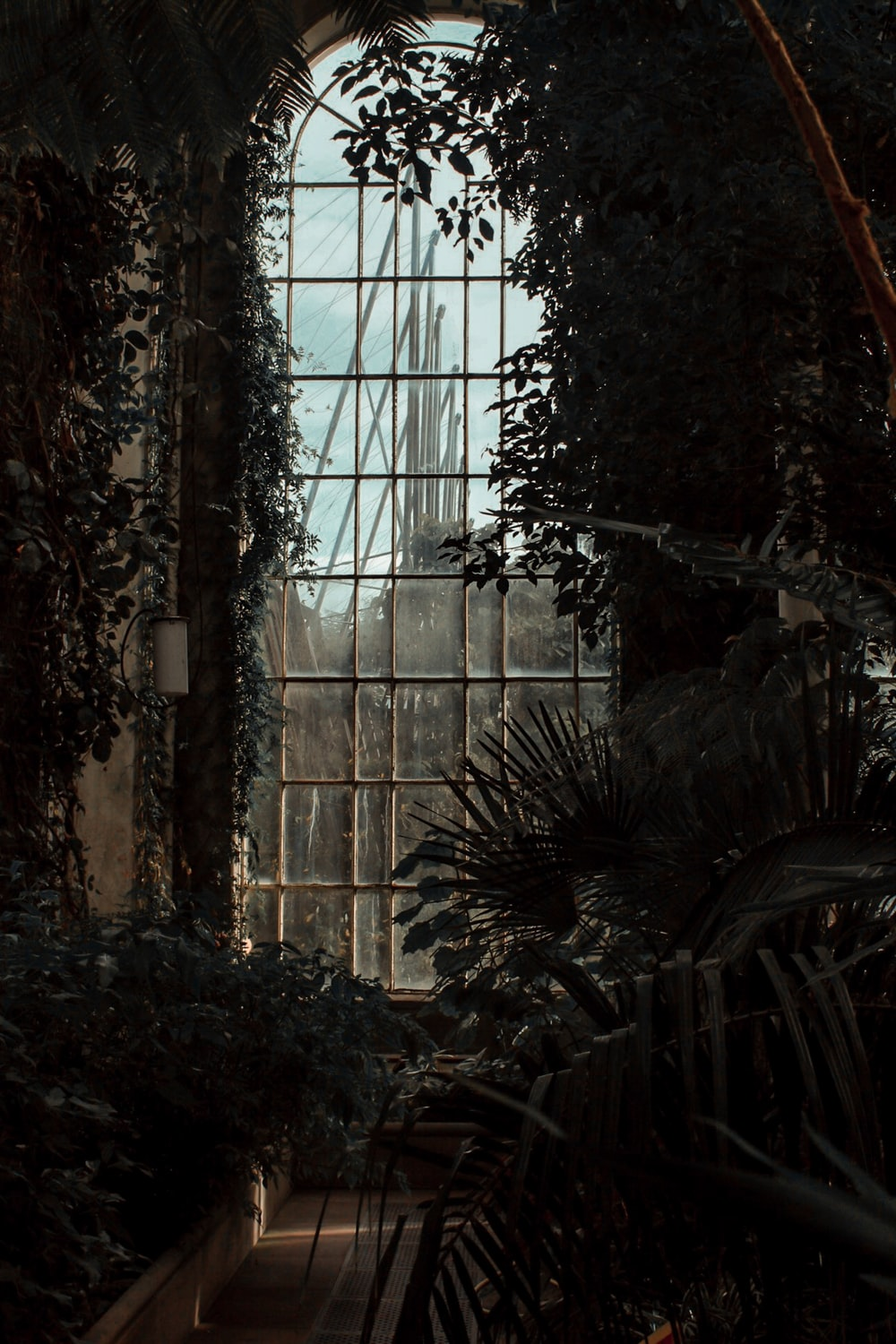 plants inside room with arch glass window