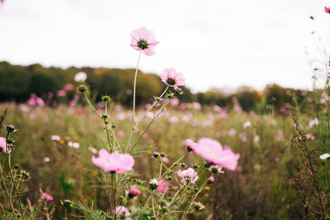 While taking my usual stroll around the forest i saw a field filled with flowers, the flowers are initiative of the local farmers to support the bees.
