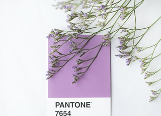 Lilac Pantone