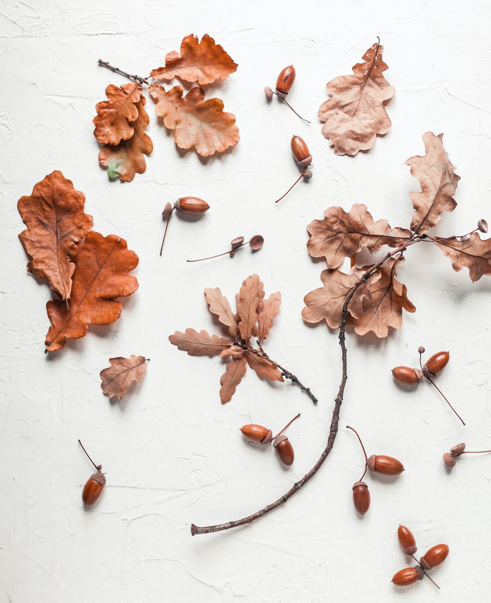brown leaves and nuts on white surface