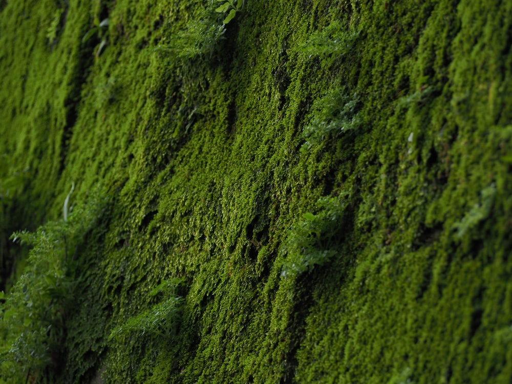 Green And White Abstract Painting Photo Free Moss Image On Unsplash
